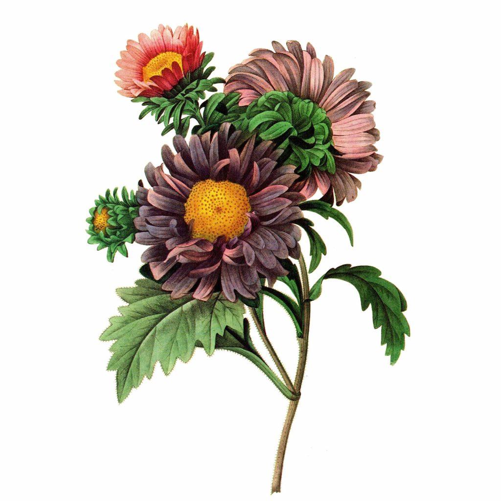 Godspeed_Flower_Web